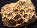 barnacles, etc