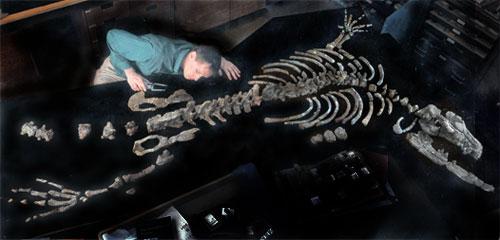 Dr. Thewissen examining pelvis of Ambulocetus