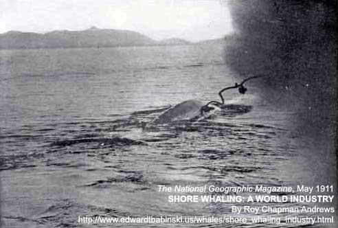 Whale Harpoon